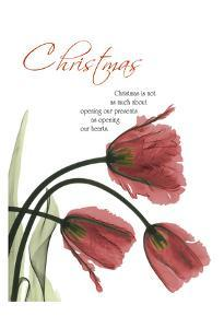 Christmas Tulips 1 by Albert Koetsier