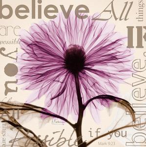 Chrysanthemum Believe by Albert Koetsier