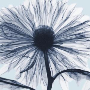 Chrysanthemum Blues by Albert Koetsier