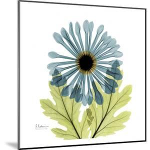 Chrysanthemum C by Albert Koetsier