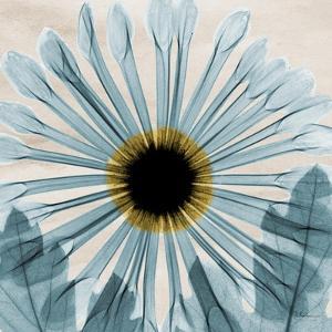 Chrysanthemum Close-Up by Albert Koetsier