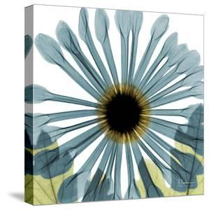 Chrysanthemum by Albert Koetsier