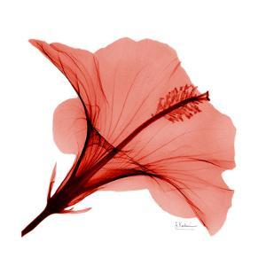 Close Up of Red Beauty II by Albert Koetsier