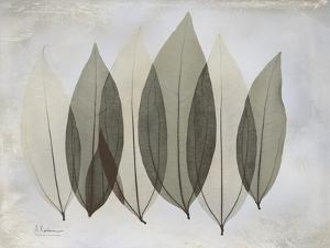 Coculus Leaf by Albert Koetsier