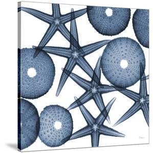 Collage of Starfish and Sea Urchins by Albert Koetsier