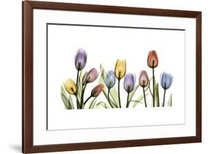 Colorful Tulip Scape by Albert Koetsier