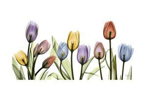 Colorful Tulip Scape by Albert Koetsier