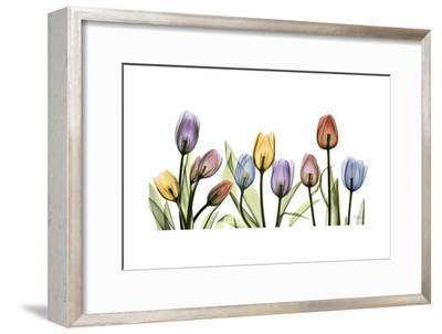 Colorful Tulip Scape