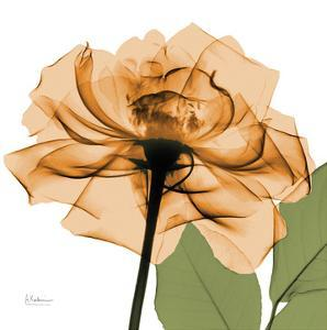Copper Rose by Albert Koetsier