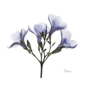 Crocus's in Purple by Albert Koetsier