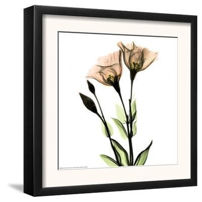 Crystal Flowers X-ray, Gentian