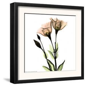 Crystal Flowers X-ray, Gentian by Albert Koetsier