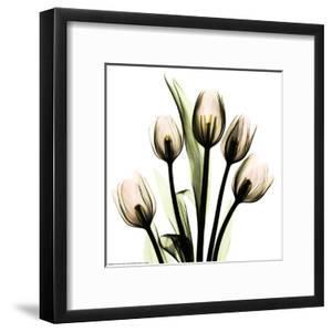 Crystal Flowers X-ray, Tulip Bouquet by Albert Koetsier