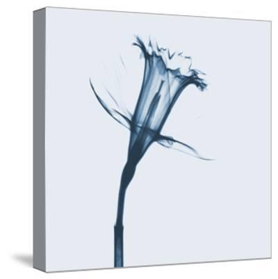 Daffodil in Blue by Albert Koetsier