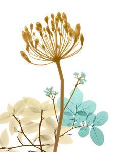 Desert Bloom 2 by Albert Koetsier