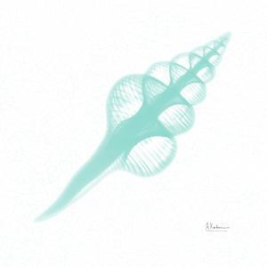 Dry Fusinus Colus Seafoam by Albert Koetsier