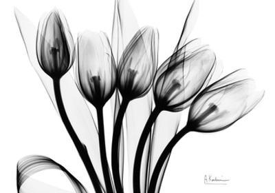 Early Tulips N Black and White by Albert Koetsier