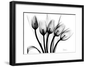 Early Tulips N Black and White by Albert Koetsier