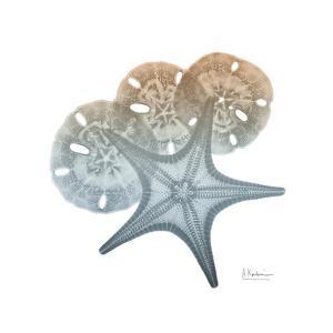 Earthy Hues Starfish and Sand Dollar by Albert Koetsier