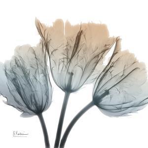 Earthy Tulips by Albert Koetsier