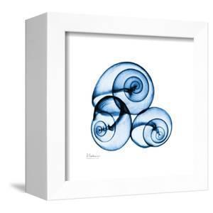 Electric Blue Moonsnails 1 by Albert Koetsier