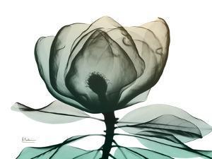 Emerald Magnolia 1 by Albert Koetsier