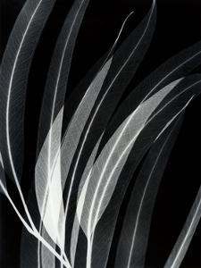 Eucalyptus 2 by Albert Koetsier