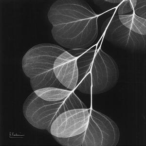 Eucalyptus Black and White II by Albert Koetsier