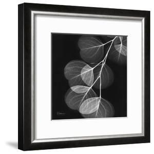 Eucalyptus Black and White II by Albert Koetsier
