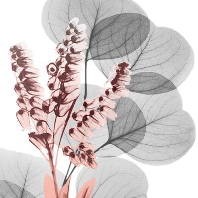 Eucalyptus Blush 2 by Albert Koetsier
