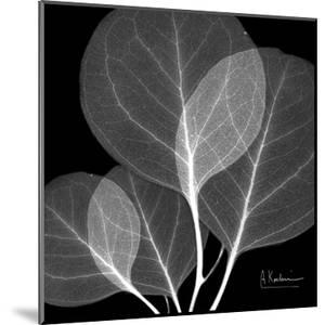 Eucalyptus Close Up Black and White by Albert Koetsier