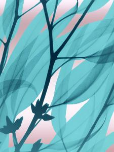 Eucalyptus Cotton Candy by Albert Koetsier