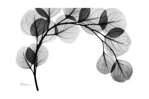 Eucalyptus Gray by Albert Koetsier
