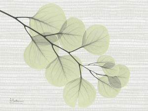 Eucalyptus Green on Horizontal by Albert Koetsier