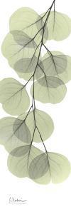 Eucalyptus in Green III by Albert Koetsier