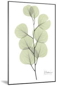 Eucalyptus in Pale Green by Albert Koetsier