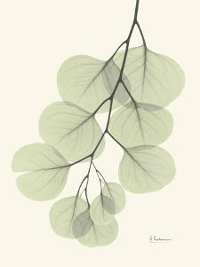 Eucalyptus Leaves in Green by Albert Koetsier
