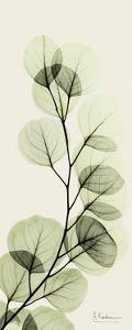 Eucalyptus Moment by Albert Koetsier