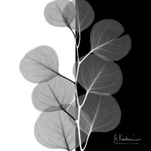Eucalyptus on Black and White by Albert Koetsier
