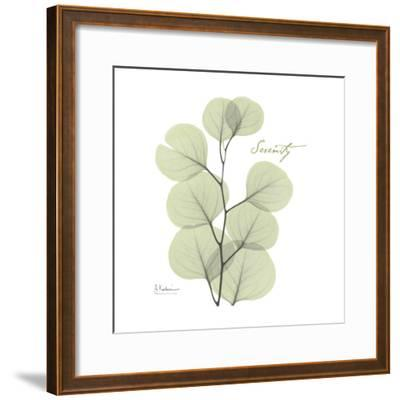 Eucalyptus Serenity