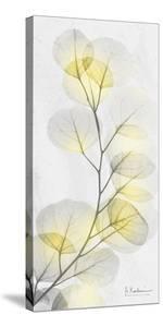 Eucalyptus Sunshine 1 by Albert Koetsier