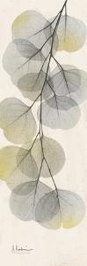 Eucalyptus Sunshine 2 by Albert Koetsier