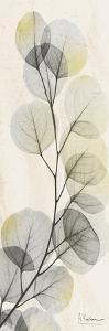 Eucalyptus Sunshine by Albert Koetsier