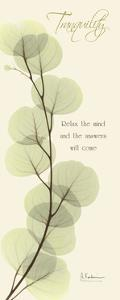Eucalyptus Tranquility by Albert Koetsier