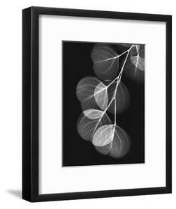 Eucalyptus Xray 1 by Albert Koetsier