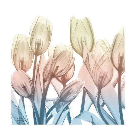 albert-koetsier-fantastic-bloom