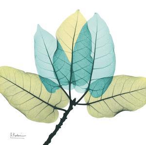 Ficus Burkey by Albert Koetsier