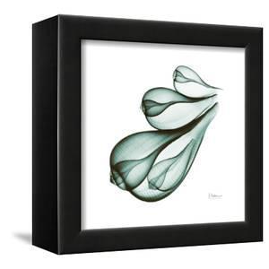 Fig Shells Down by Albert Koetsier