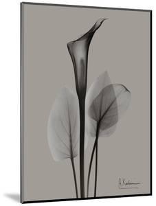 Flora Portrait A by Albert Koetsier