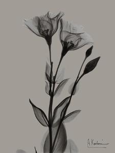 Flora Portrait B by Albert Koetsier